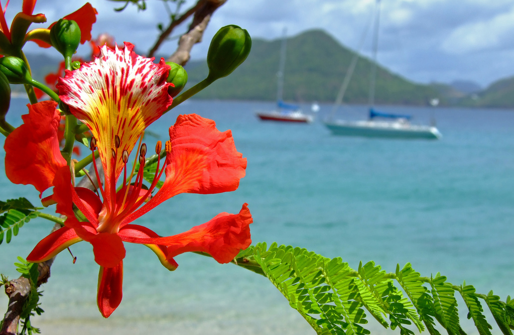 12 AMAZING THINGS TO DO IN SAINT LUCIA