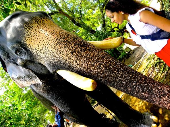 Petting an elephant