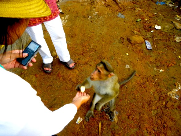 There were monkeys everywhere and we couldn't resist feeding them!
