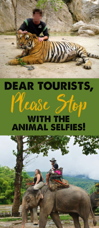 "Tourists: Stop with the Animal Selfies! Don't Visit Places Like ""Tiger Temple"""