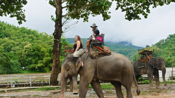 Elephant Riding - The Top Most Cruel Tourist Animal Attraction