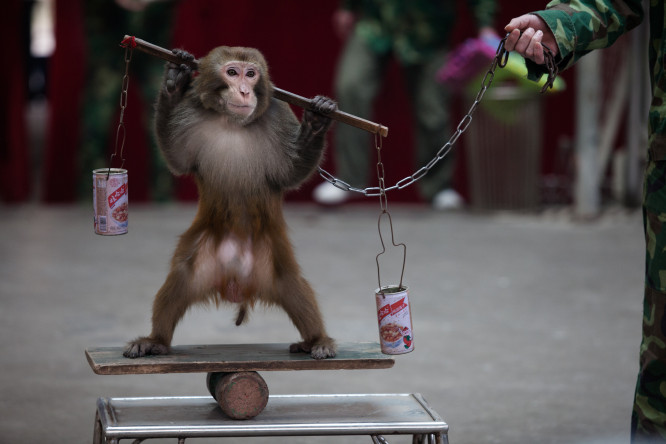 Performing monkey in China
