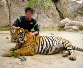 """Tourists: Stop with the Animal Selfies! Don't Visit Places Like """"Tiger Temple"""""""