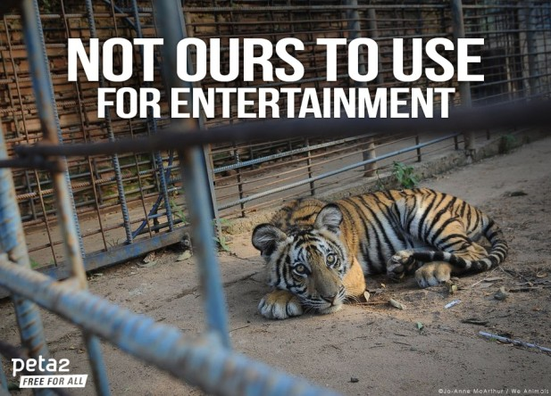 Wild vs. Captivity: Stop Visiting Animal Attractions