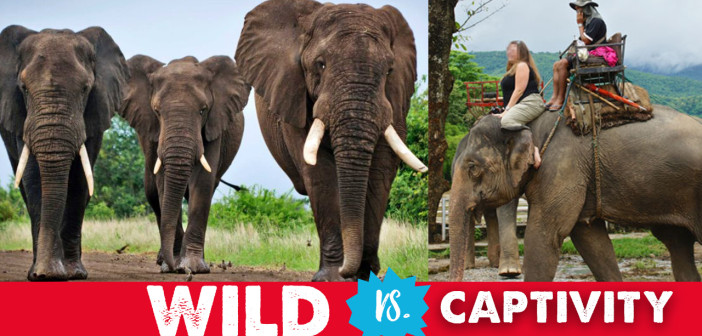 Wild vs. Captivity: Stop Visiting Animal Attractions (With Video)