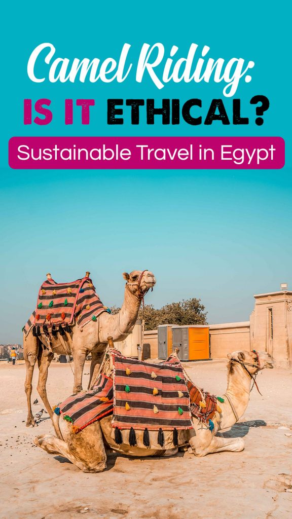 Camel, Horse, & Donkey Riding in Egypt (Anywhere Really): Is it ethical? | Alternatives & Solutions