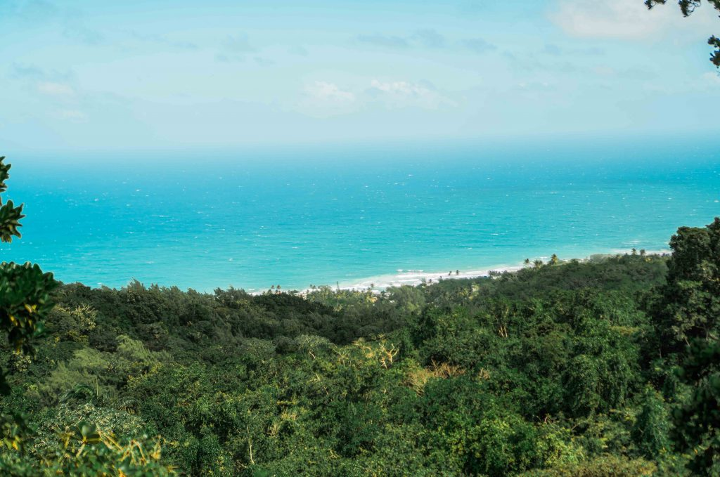 Barbados Eco Travel Guide: Sustainable & Vegan Friendly Things to Do and Eat